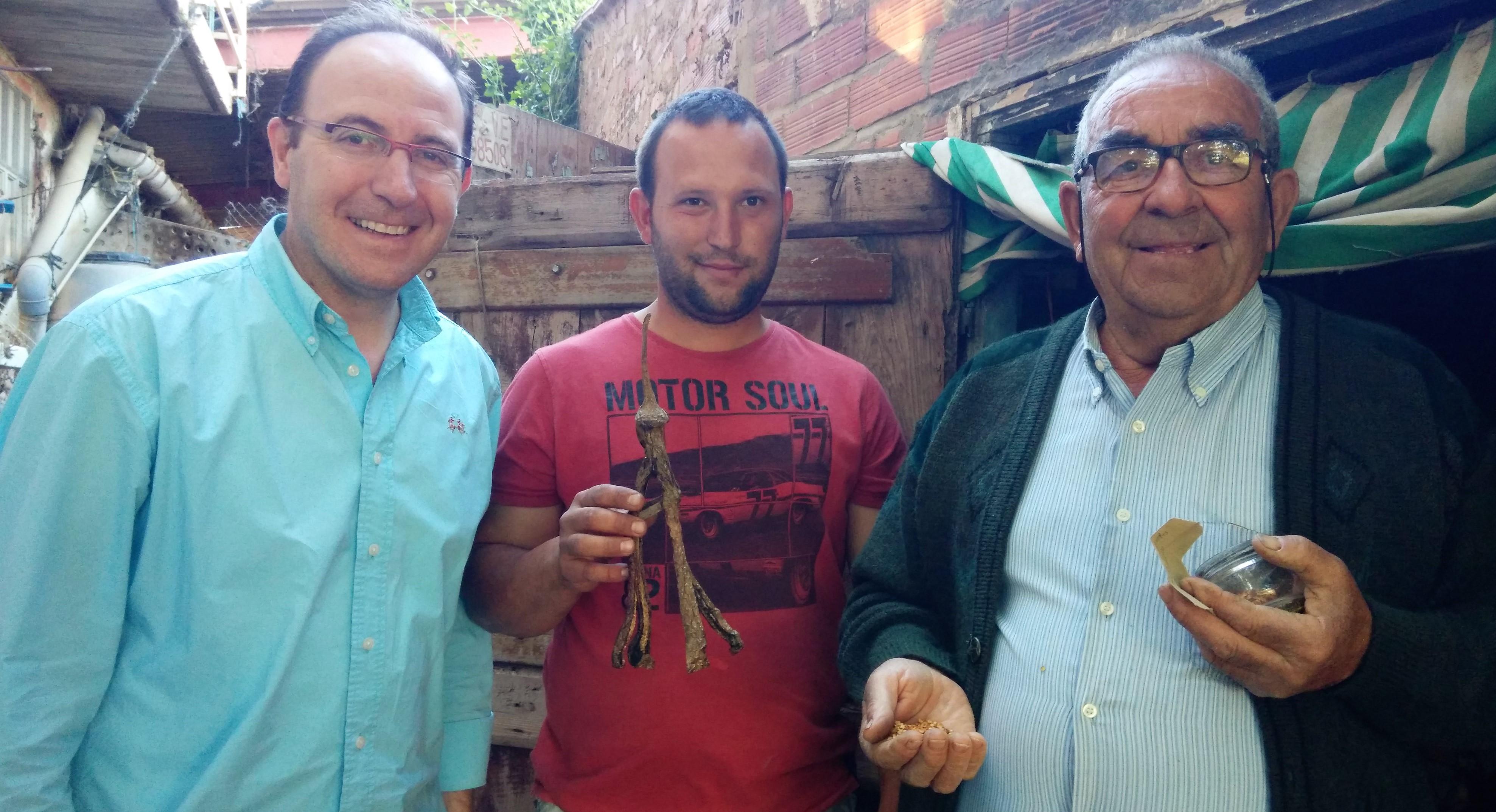 Prospectando semillas de la berenjena larga de Caspe EMILIO CORTÉS